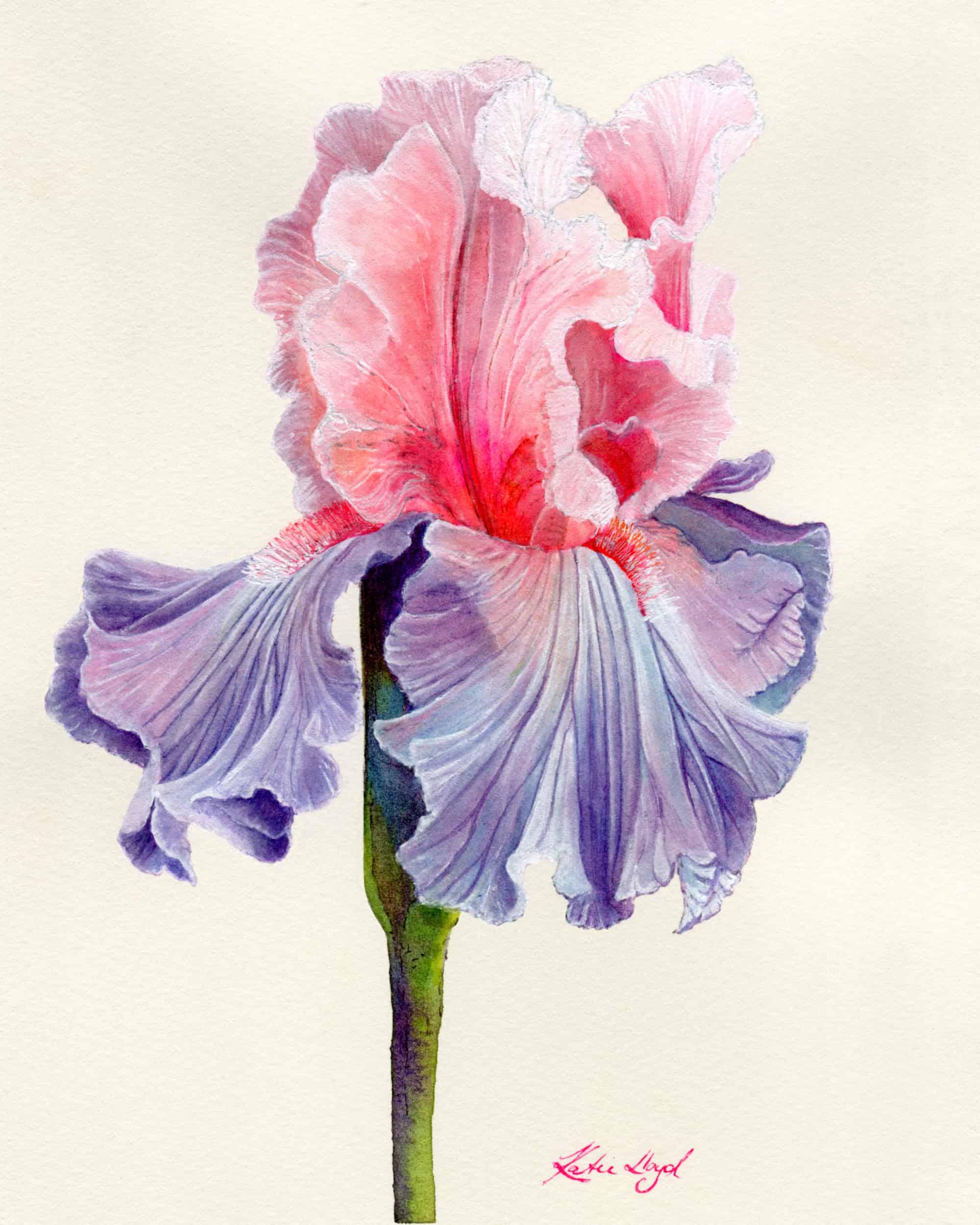Wildwood Bloom Visual Portfolio