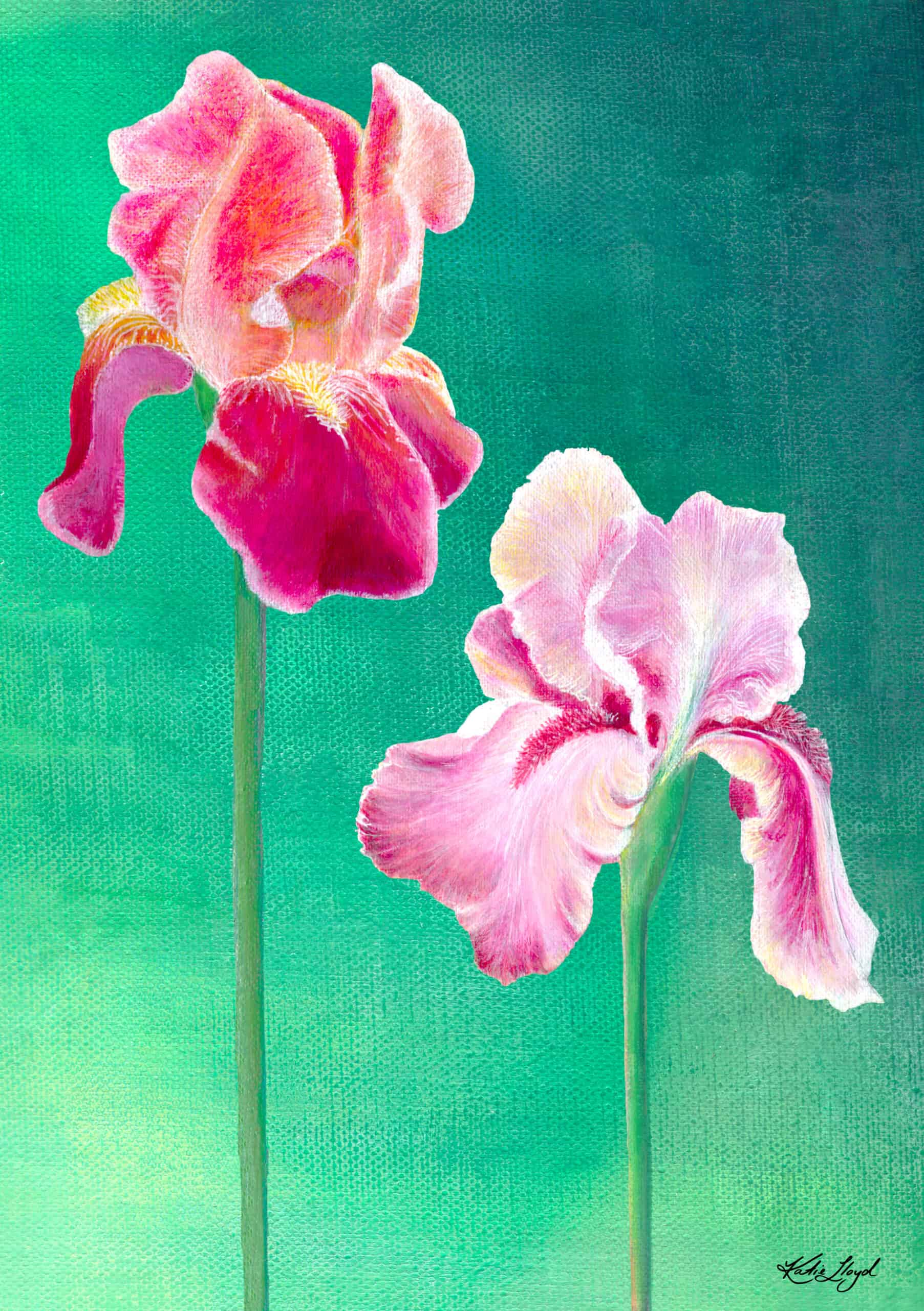 Two Pink and red Iris blooms acrylic painting
